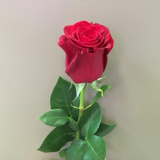 Роза красная (Фридом)