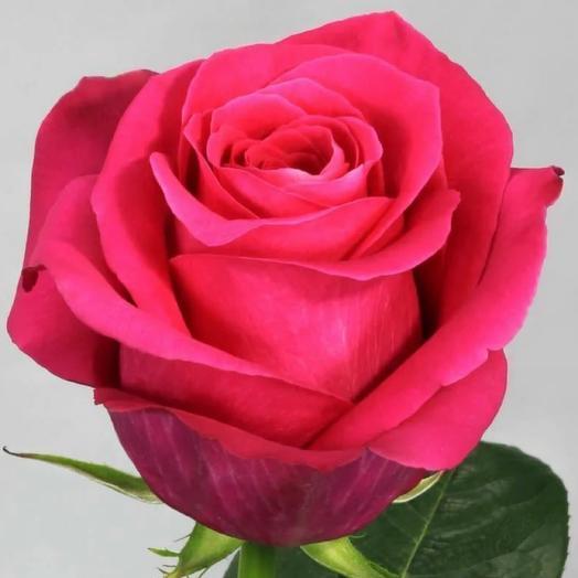 Роза Пинк Флойд (Эквадор) 70 см
