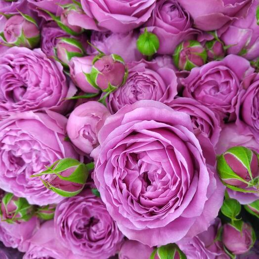 Букет кустовых роз Мисти бабблз. Розовые розы. Кустовые розы