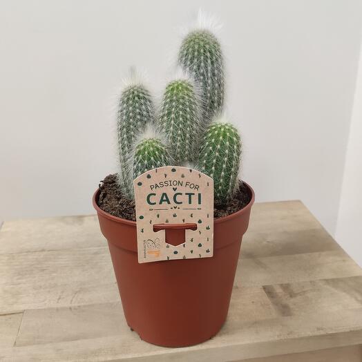 🌵 кактус
