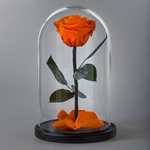 Роза в колбе оранжевая премиум