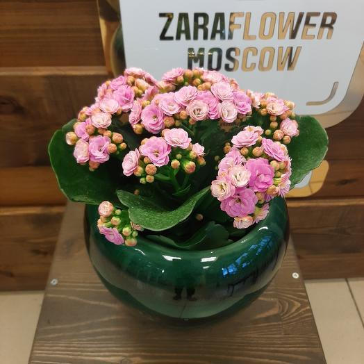 Каландива: букеты цветов на заказ Flowwow
