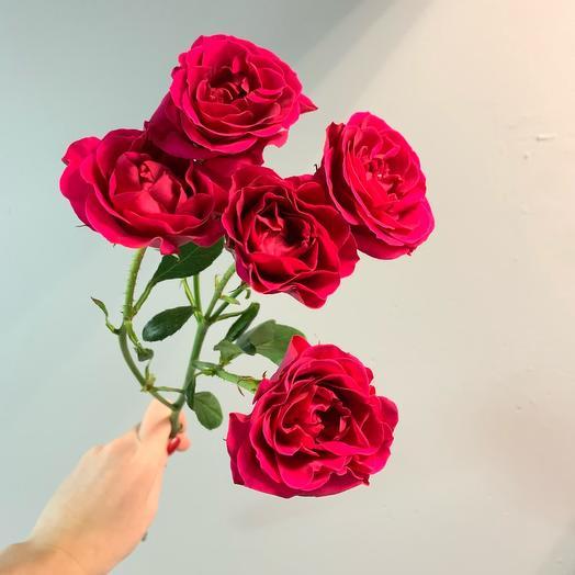 Кустовая алая Роза