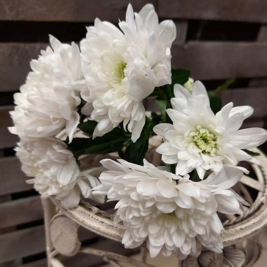 Хризантема Кустовая Балтика белая поштучно