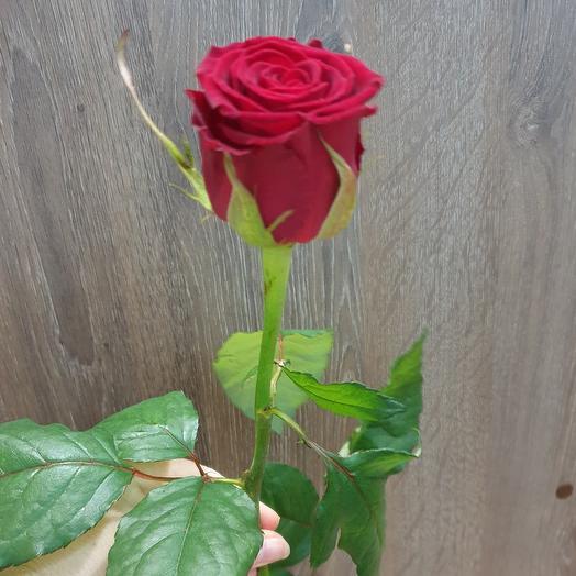 Роза красная 70 см