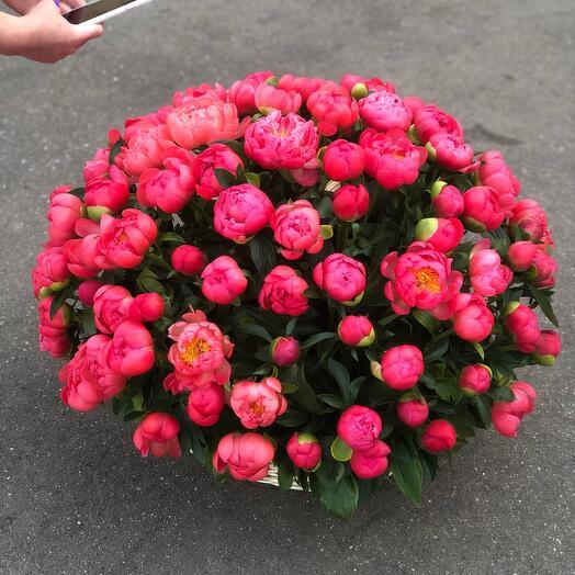 Корзина с цветами пион