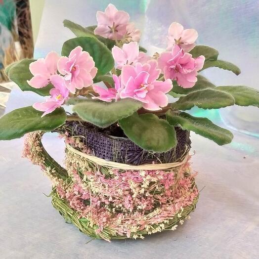 Фиалочка в чашечке из сухоцветов