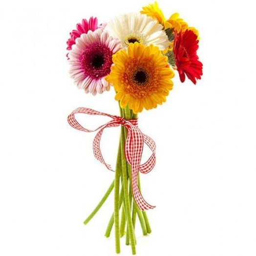 7 гербер с лентой. Код 180042: букеты цветов на заказ Flowwow