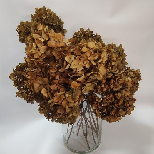 Гортензия сухоцвет, интерьерная