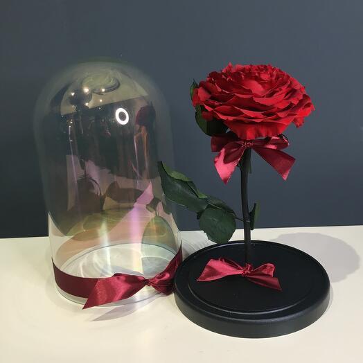 Роза красная в колбе (бутон до 12 см)