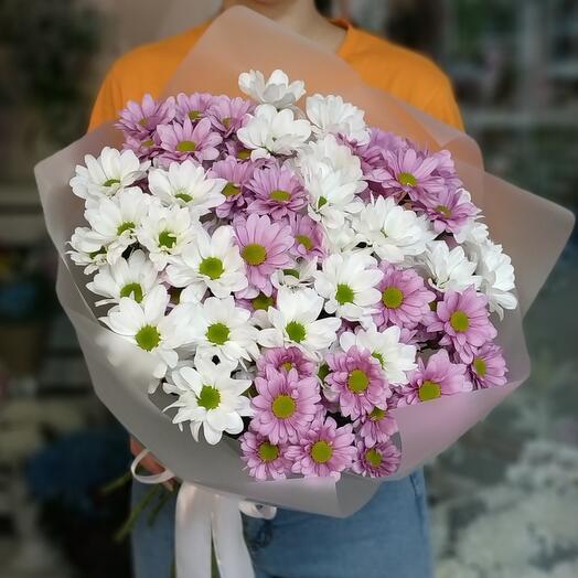 Хризантемы Бакарди