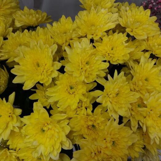 Хризантема жёлтая 1 шт