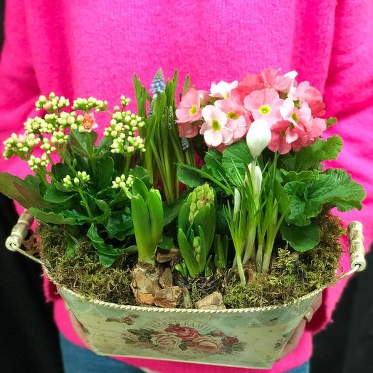 Весенняя композиция из первоцветов: букеты цветов на заказ Flowwow