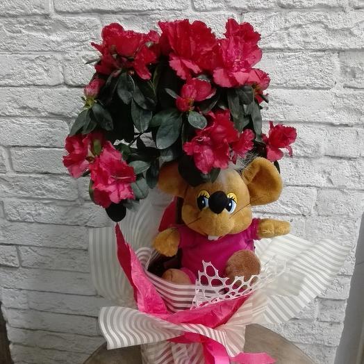 Штамбовая крупноцветковая азалия с игрушкой: букеты цветов на заказ Flowwow