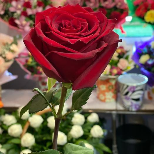 эквадорская роза 90см