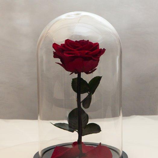 Роза в колбе RozaRose Медиум Бордовая