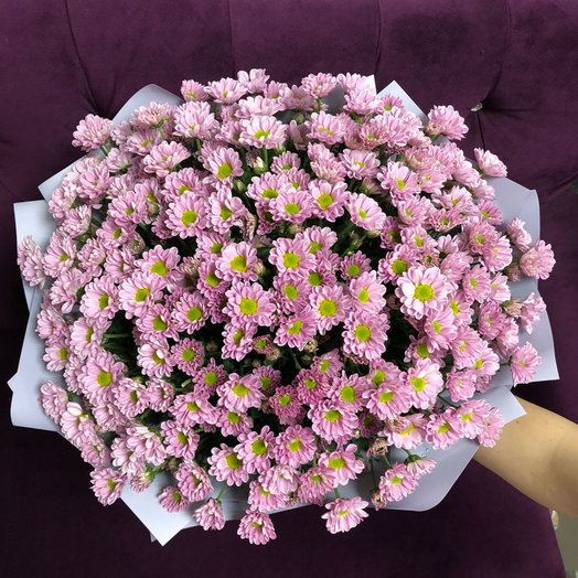 Букет из 23 розовых хризантем: букеты цветов на заказ Flowwow