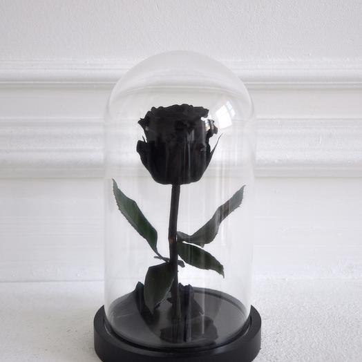 Роза в колбе мини Черная Звезда: букеты цветов на заказ Flowwow