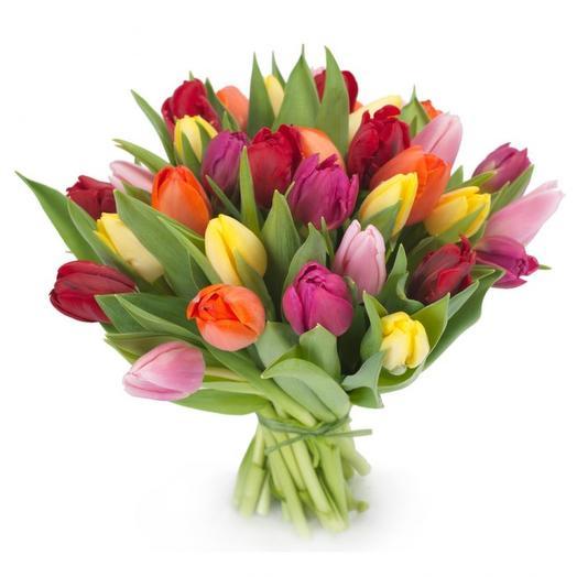 Тюльпан 31