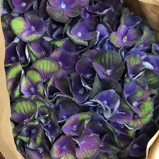 Комплимент из гортензии: букеты цветов на заказ Flowwow