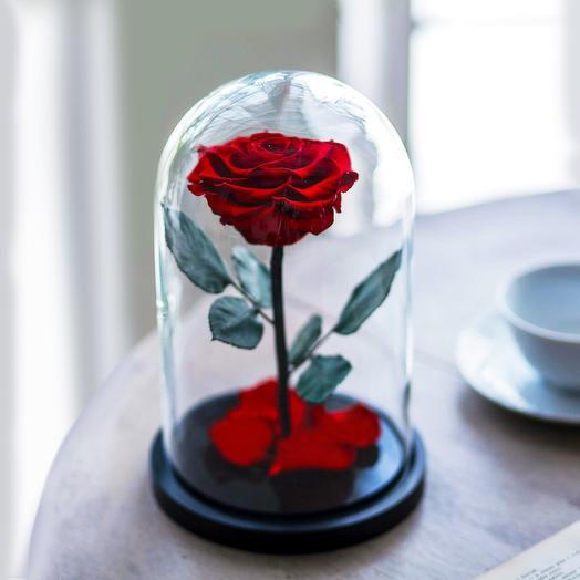Роза в колбе Premium красная: букеты цветов на заказ Flowwow