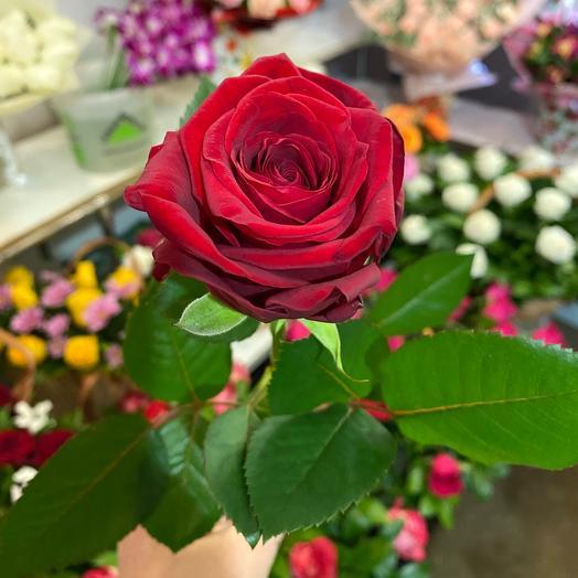 Роза реднаоми. 50см