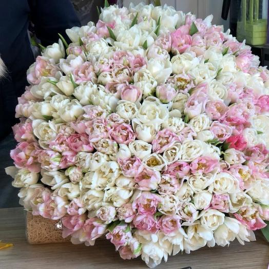 201 пионовидный тюльпан