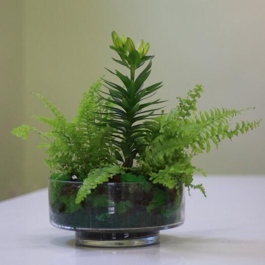 Флорариум с лилией и папоротником