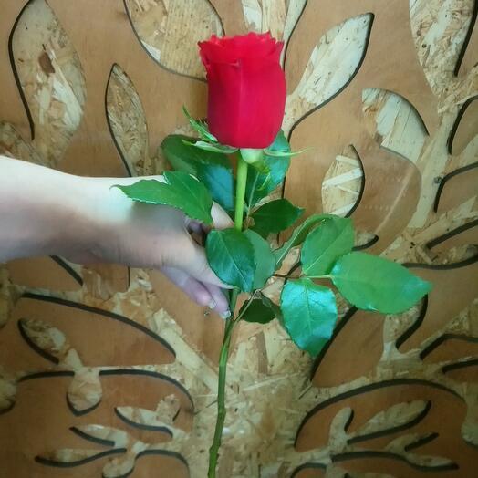 Роза красная 40см