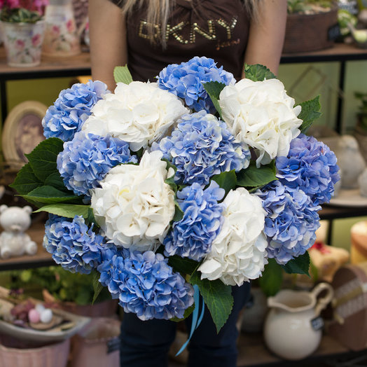 """Букет из гортензий """"Гортензия"""" (13 шт): букеты цветов на заказ Flowwow"""