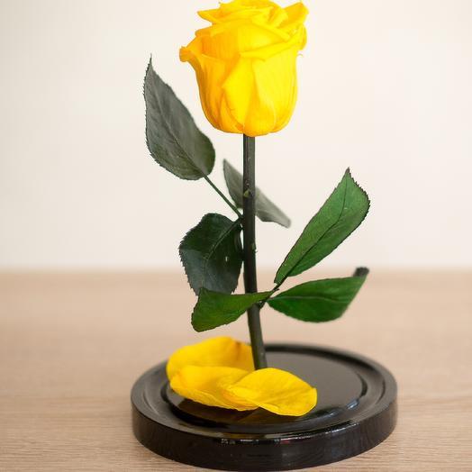 Жёлтая роза в колбе Мини Плюс: букеты цветов на заказ Flowwow