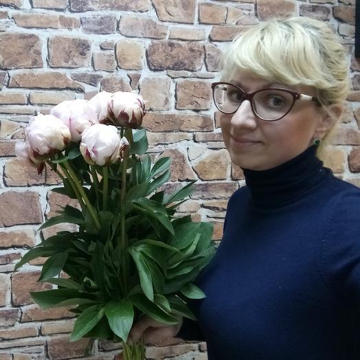 Пионы, 9 шт: букеты цветов на заказ Flowwow