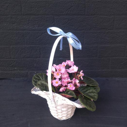 Розовая фиалка: букеты цветов на заказ Flowwow
