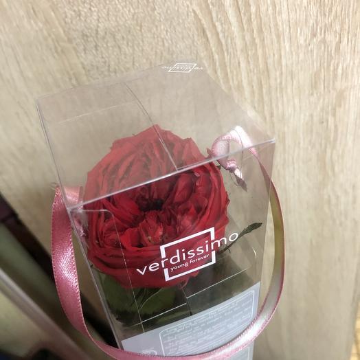 Пионовидная красная роза