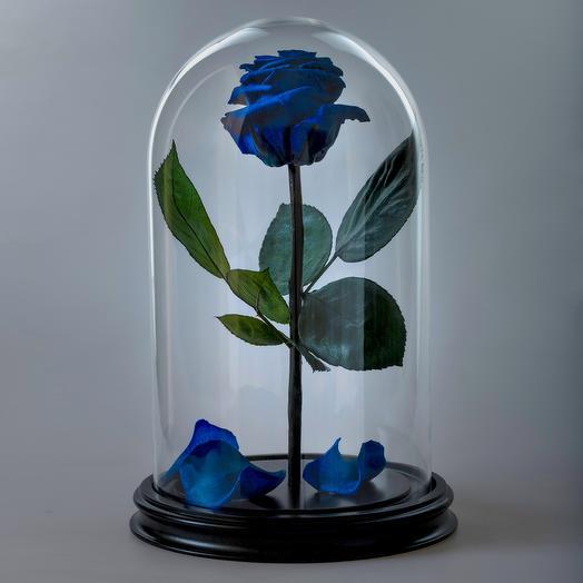 Роза в колбе синяя премиум