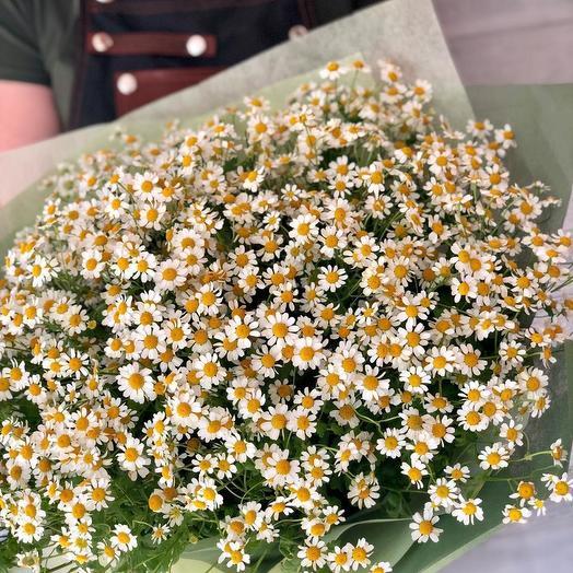 Ромашки в дизайнерской упаковке 101 шт: букеты цветов на заказ Flowwow