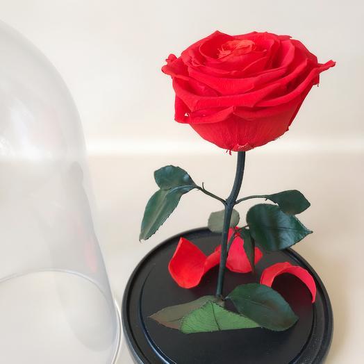 Роза в колбе стандарт оранжевая