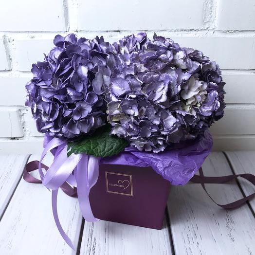 Фиолетовая гортензия в коробке