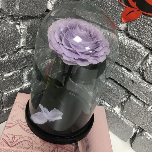 Роза vip фиолетовая