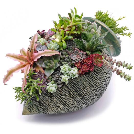 """Festive cake"" live composition of succulents"
