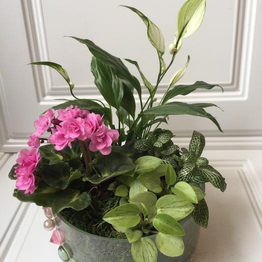 Флорариум «розовое облако»: букеты цветов на заказ Flowwow
