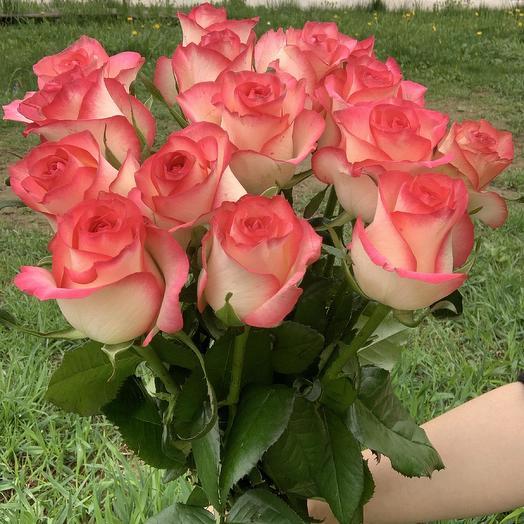 Розы Джумелия