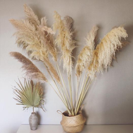 Кортадертя пампасная трава