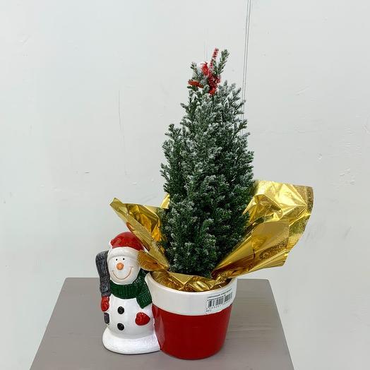 Комнатное растение новогодняя композиция