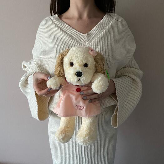 Собака в розовом платье