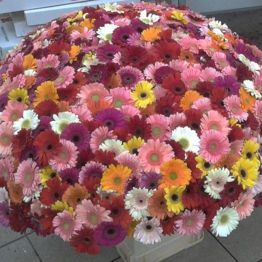 Гербера 501 в корзине: букеты цветов на заказ Flowwow