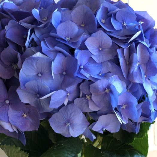 Букет из гартензии: букеты цветов на заказ Flowwow