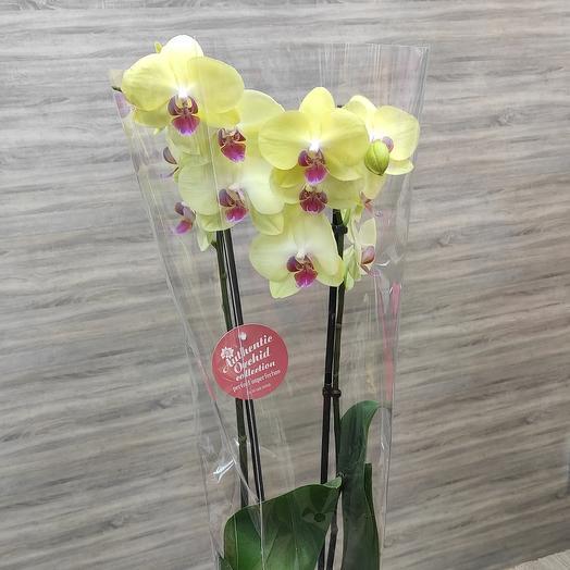 ✅ Орхидея 2 стрелы