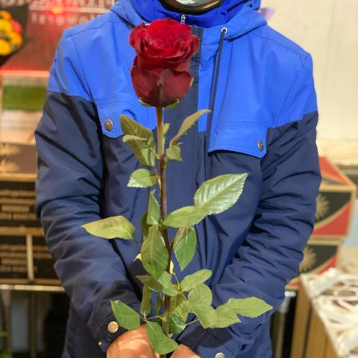 Эквадорская Роза