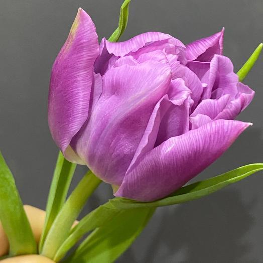 Тюльпан лаванда